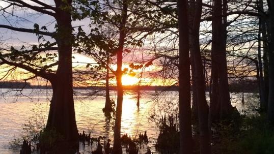 Title: Campsite View Location: Lake Chicot State Park, AR Damon Dean